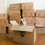 Mes enfants ne veulent pas déménager